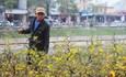 Đừng để 30 Tết mới mua hoa, khổ nông dân, người bán hoa lắm!