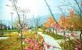 Mãn nhãn rừng hoa đào như cổ tích tại Sun World Fansipan Legend