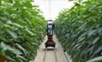 Ứng dụng công nghệ thông minh trong nông nghiệp