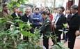 Nâng tầm giá trị cây trà hoa vàng ở vùng núi huyện Tam Đảo