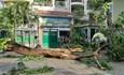 Cây xanh bật gốc đè nhiều học sinh ở Thành phố Hồ Chí Minh