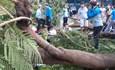 Vụ cây đổ đè vào học sinh: Ngoài 1 cháu tử vong còn có 3 ca nặng