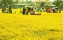 Tích tụ, tập trung ruộng đất ở Việt Nam trong điều kiện mới: Những vấn đề lý luận và thực tiễn