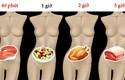 Mất bao lâu để tiêu hóa hết thực phẩm ăn hàng ngày?