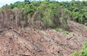 Suy thoái rừng trên thế giới - Thực trạng và giải pháp