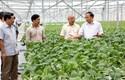Nông sản Vĩnh Phúc từng bước vươn tầm thế giới