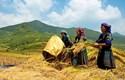 Phát huy hiệu quả các chính sách dân tộc ở Cao Bằng