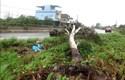 Quảng Ngãi thiệt hại nặng về tài sản do bão số 9