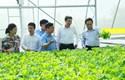 """Để hợp tác xã là """"điểm tựa"""" của nông dân"""
