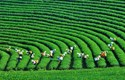 Tăng trưởng xanh - Chìa khóa của phát triển bền vững