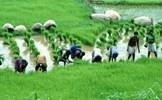 Phát triển nông nghiệp xanh, bền vững ở các quốc gia châu Á