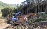 Quản lý rừng bền vững ở các nước phát triển