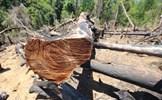 Kiểm tra, xử lý nghiêm vụ phá rừng tại miền núi Quảng Nam