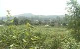 Vĩnh Phúc sẽ không lấy rừng phòng hộ tại núi Ngang làm công viên nghĩa trang