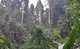 Yên Bái - khi đàn cá tầm nuốt các cánh rừng