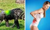 7 dấu hiệu cho thấy con người vẫn đang tiến hóa hằng ngày