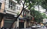 Hiểm họa từ cây xanh có nguy cơ gãy đổ trong mùa mưa bão