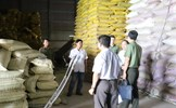 Nghi xuất hiện tình trạng nhập lậu lợn Trung Quốc giá rẻ vào Việt Nam