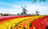 Kinh nghiệm phòng ,chống tham nhũng của Hà Lan và Đức