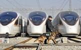 """""""Luồng gió mới"""" cho đợt di dân lớn nhất hành tinh ở Trung Quốc"""