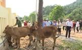 Quảng Bình: Mặt trận huyện Lệ Thủy tiếp sức cho người nghèo