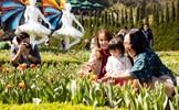 Đừng bỏ lỡ: Sắc màu lễ hội xuân Sun World