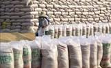 Đã nhập kho dự trữ quốc gia 190.000 tấn gạo