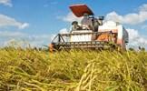 Phát triển nông nghiệp, nông thôn bền vững ở nước ta