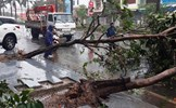 Bão số 12 quật đổ cây, gây ngập úng ở Phú Yên