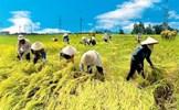 Nông nghiệp trước COVID-19: Yêu cầu của Thủ tướng về 3 không gian kinh tế