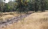 Nhiều nơi nắng khô, nguy cơ cháy rừng cao