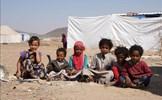 Liên hợp quốc cảnh báo tình trạng mất an ninh lương thực nghiêm trọng trong năm 2020
