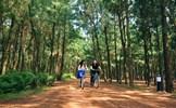 Những rừng thông đẹp nhất miền Bắc Việt Nam