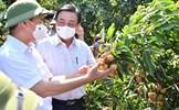 Khôi phục sản xuất ở vùng nông nghiệp trọng điểm