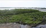 Phê duyệt Đề án về bảo vệ và phát triển rừng vùng ven biển