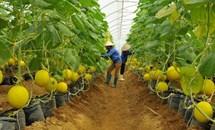Một số vấn đề về tích tụ, tập trung đất đai trong phát triển nông nghiệp và nông thôn hiện nay