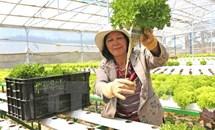 Một số giải pháp nhằm phát huy vai trò của nông dân Việt Nam hiện nay