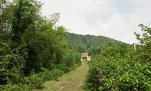Vĩnh Phúc lấy rừng phòng hộ làm siêu nghĩa trang: Người dân địa phương đồng loạt phản đối