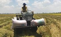 """Làm giàu trên """"lưng"""" người trồng lúa"""