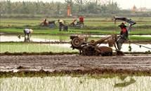 Dồn đổi ruộng đất để phát triển sản xuất nông nghiệp hàng hóa