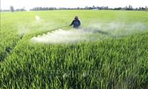 Dịch vụ hỗ trợ 'làm thay' giúp nông dân thuận lợi sản xuất