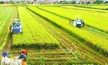 Mối quan hệ giữa nông nghiệp và công nghiệp trong xây dựng và phát triển đất nước theo tư tưởng Hồ Chí Minh - Vận dụng vào hoàn thiện cơ cấu ngành kinh tế hiện nay