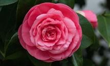 Kỳ lạ loài hoa hiếm nhất thế giới chỉ xuất hiện ở duy nhất 2 nơi