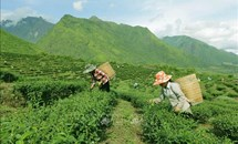 Phê duyệt Chương trình Mục tiêu quốc gia phát triển KT-XH vùng đồng bào dân tộc thiểu số và miền núi