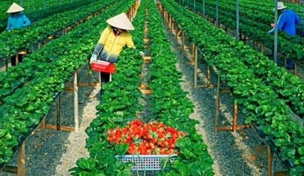 Khởi nghiệp trong nông nghiệp – thời trang hay xu hướng?